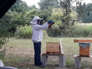 Sortie découverte abeilles visite ruches enfants