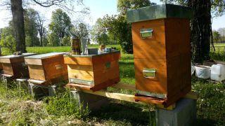 Sortie Nature découverte des abeilles visite des ruches avec les enfants dans le Grand ESt