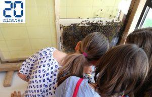 Apiscope école Schuman Strasbourg Apila l'abeille